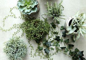 Ces plantes sont parfaites pour les petits espaces !