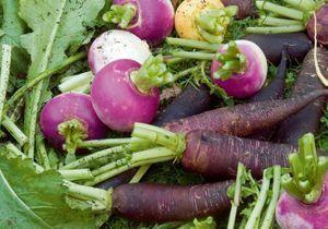 Tout savoir sur les légumes oubliés