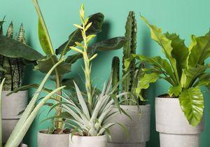 Vous ne tuerez plus jamais vos plantes grâce à ces 5 astuces toutes simples