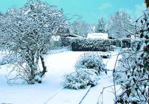 Comment préparer votre jardin à affronter l'hiver ?