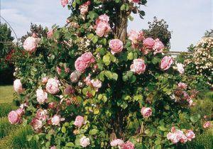 Quelle est la fleur préférée des français ?