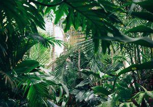 Bon plan : des plantes à seulement 2 € au cœur de Paris !