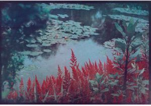 "Exposition ""Photographier les jardins de Monet, Cinq regards contemporains"""