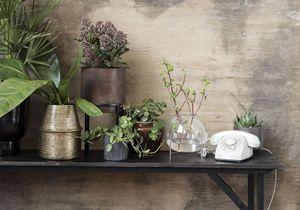 6 plantes à adopter au bureau pour un espace de travail green