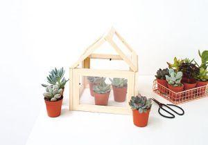 DIY : fabriquez une mini serre à partir de cadres !