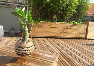 DIY : créez votre propre suspension végétale