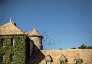 Un été en France : une parenthèse verdoyante dans les Yvelines