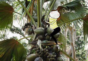L'huile de palme : le point sur la controverse