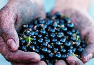La perle noire de Bourgogne