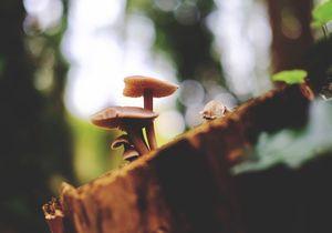 Quiz champignons des bois