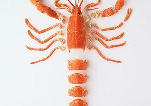 Comment décortiquer un homard