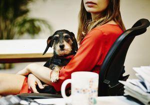 Le « congé patte-ternité », le nouveau phénomène qui affole les amis des chiens et des chats