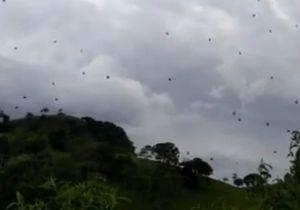 Oserez-vous regarder cette vidéo d'une « pluie » d'araignées au Brésil ?