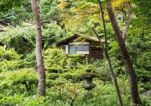 Où aller pour prendre une bouffée d'air frais à Tokyo ?