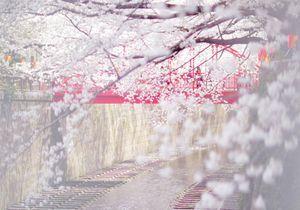 20 photos qui donnent envie de visiter Tokyo
