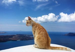 S'occuper de 55 chats sur une île en Grèce : l'offre d'emploi d'un couple fait le buzz sur les réseaux sociaux