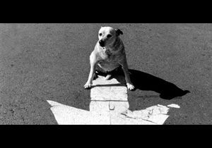 Playlist Doggy Pack