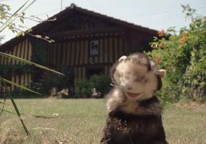 Le clip de la semaine : « Ferret & Hunters » de Bellevue Beaches