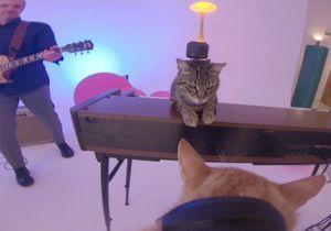 Six chats ont réalisé le dernier clip d'Alain Chamfort (et c'est trop mignon)