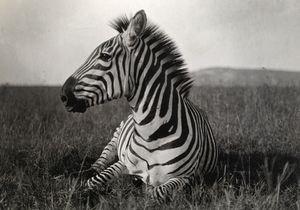 « La légende National Geographic » : l'expo pour voyager loin !