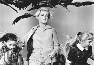 Notre film culte du dimanche : « Les Oiseaux » d'Alfred Hitchcock (1963)