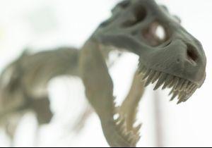 Il glisse sa demande en mariage dans un article sur la découverte d'un dinosaure