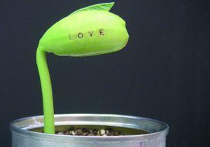 La plante de l'amour