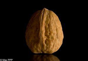 Sexualité : manger des noix améliorerait la qualité du sperme