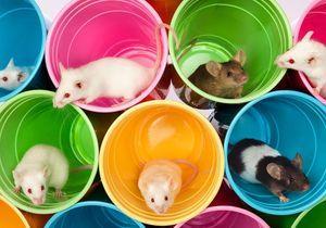 Rêver d'un rat ou d'une souris : notre interprétation