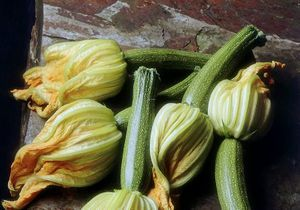 Focus nutrition : la courgette