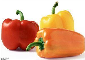 Focus nutrition : le poivron