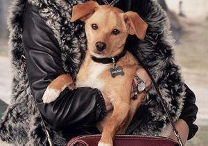 Miranda Kerr et Ariana Grande : leurs chiens stars de la campagne Coach