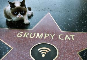Grumpy Cat, le chat qui vaut 100 millions de dollars
