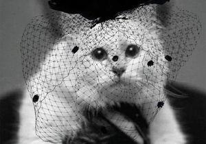 Karl Lagerfeld : voici la femme qui va hériter de Choupette