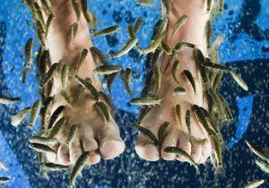 Fish pédicure : alerte sur les conditions d'hygiène