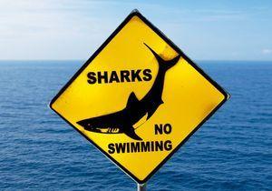 Hawaï : la touriste attaquée par un requin est décédée