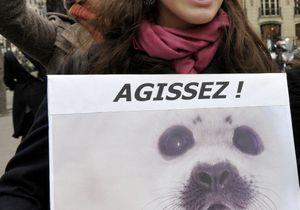 Les anti-fourrures à Paris pour dénoncer la torture des bêtes