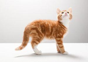 Les internautes se mobilisent pour Oscar, un chaton torturé