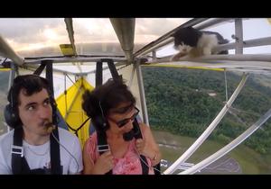 #Prêtàliker : caché dans un ULM, un chat s'envole avec les passagers