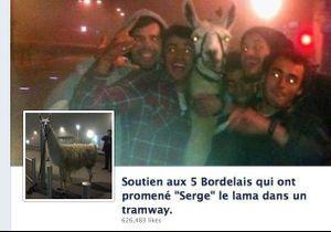 Quand un lama bordelais devient la nouvelle star du Net…