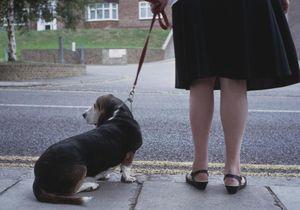 Quand une histoire de garde de chien vire au drame