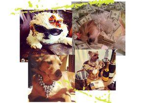 Rich Dogs of Instagram : quand Internet se moque des chiens millionnaires