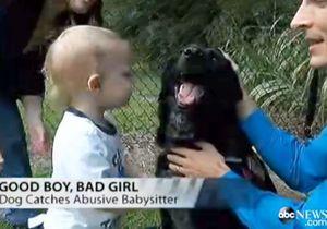 Un chien sauve un bébé maltraité par sa nounou