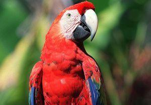 Un perroquet aide à résoudre le meurtre de sa propriétaire