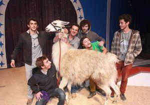 Serge le lama retrouve ses «kidnappeurs»
