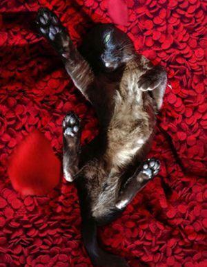 « MovieCats » : le compte qui recrée des scènes cultes du cinéma avec des chats !