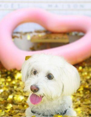 20 choses que font tous les propriétaires de chiens en secret