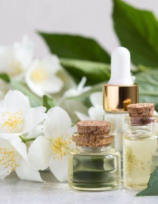 Élégant, sensuel et calmant : pourquoi le jasmin est devenu le roi des parfums ?