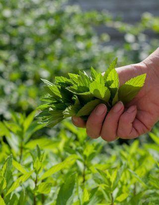 Quand la cosmétique investit dans l'agriculture régénérative