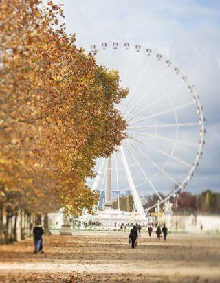 Que faire à Paris ce week-end du 10, 11 et 12 novembre ?